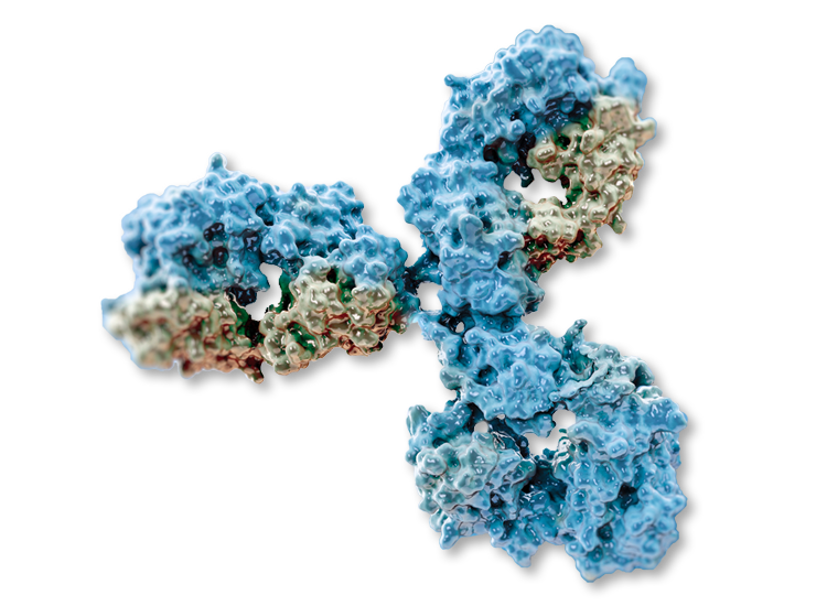 Antibody purification services